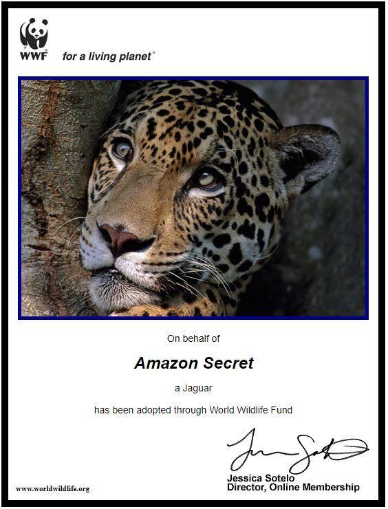 adopting-jaguar
